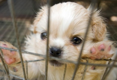 Swiss Startup Wants You to Record Your Pets on Blockchain to Stop Puppy Mills